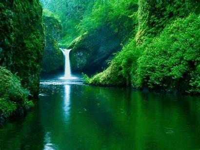 Novembre Forest River
