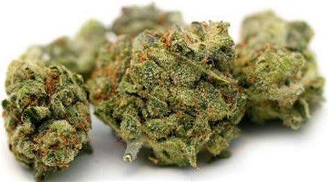 cannabis test cannabis 2013 page 3