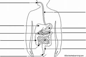 Label Digestive System Diagram Printout  Simple Version