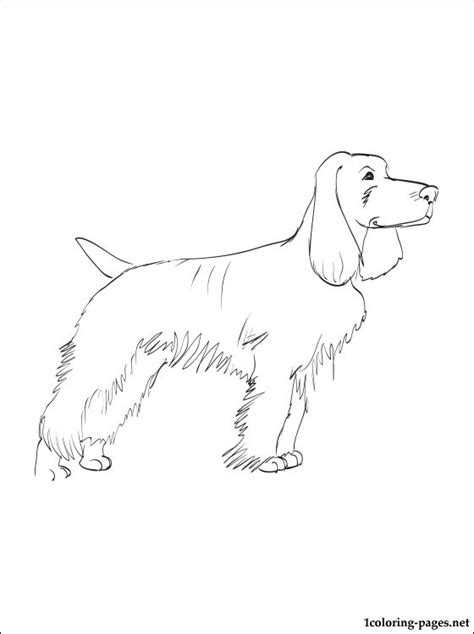 field spaniel coloring page coloring pages