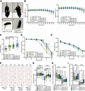 In Vivo Efficacy Of Wn1316 In Als Sod1 H46r   Mice   A