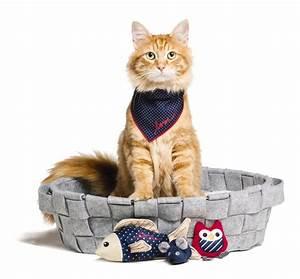 Crazy for Cats: PetSmart®, Ellen Expand New ED Ellen