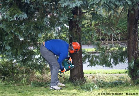Bäume Richtig Fällen  Tipps Und Anleitung Garten