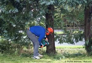 Welche Bäume Darf Man Nicht Fällen : b ume richtig f llen tipps und anleitung garten hausxxl garten hausxxl ~ A.2002-acura-tl-radio.info Haus und Dekorationen