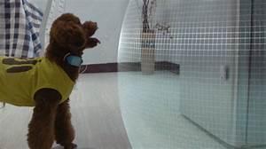 Günstiger Zaun Für Hund : spot collar ist der virtuelle zaun f r deinen hund ~ Frokenaadalensverden.com Haus und Dekorationen