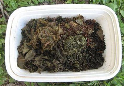 composting tea leaves  tea bags ratetea