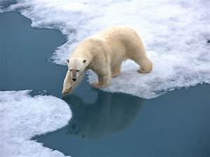 Arctic climate 'report card' reveals 'rapid and dramatic ...