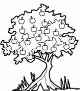 Tree Apple Coloring Clipart Fruit Trees Pear Pages Drawing Mango Forest Sketch Many Library Leaves Plants Cliparts Clip Pears Under sketch template