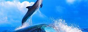 Dolphin, Cool, Wallpaper