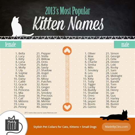 boy names for cats infographic most popular kitten names 2013 shows top 40 names for male female kittens