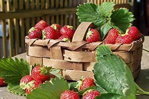 Erdbeeren Pflege Balkon : erdbeerampel selber machen anleitung ~ Lizthompson.info Haus und Dekorationen