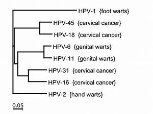 File:HPV tree 1.png - Wikimedia Commons