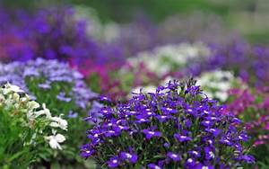 Violet Flowers Wallpapers HD Pictures – One HD Wallpaper ...