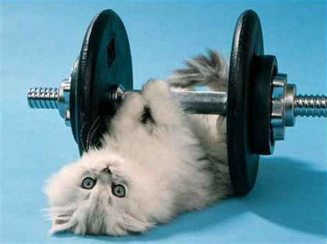 exercise cat she can lift a 14 kilo with what 171 dvorak news