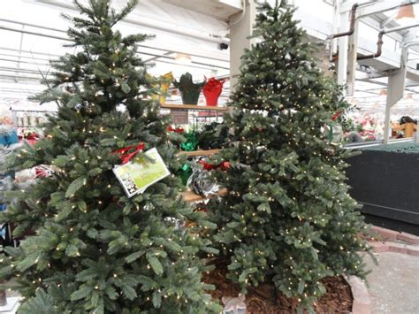 where to buy or rent christmas trees cut living or