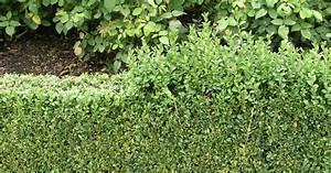 Bewässerungsschlauch Für Hecken : hecken pflanzen planen und anlegen mein sch ner garten ~ Frokenaadalensverden.com Haus und Dekorationen