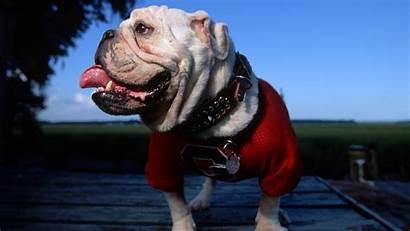 Georgia Bulldogs Bulldog 1080 Wallpapers Desktop Uga