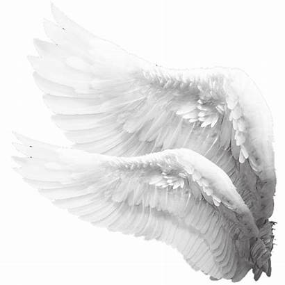 Wings Wing Angels Angelwings Whitewings Picsart Engel
