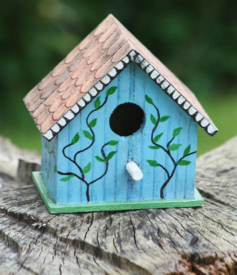 all about bird boxes eversocandida