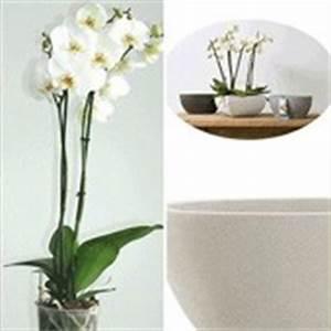 zimmerpflanzen online kaufen bestellen bei baldur garten With garten planen mit ausgefallene zimmerpflanzen kaufen
