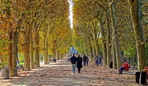 File:Couloir de l'automne Jardin des Plantes de Paris 2014Wikimedia Commons