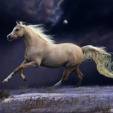 horse palomino cavalo pintura