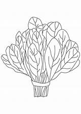 Spinach Coloring Vegetables Vegetable Clipart Plant Pages Squash Printable Clipground Drawings Letters Root sketch template