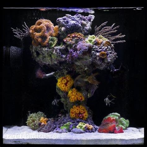 25+ Best Ideas About Reef Aquascaping On Pinterest Reef
