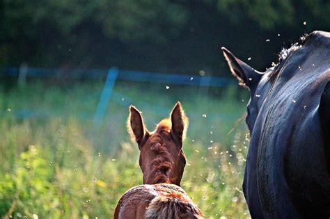 fliegenspray fuer pferde selber machen anleitung