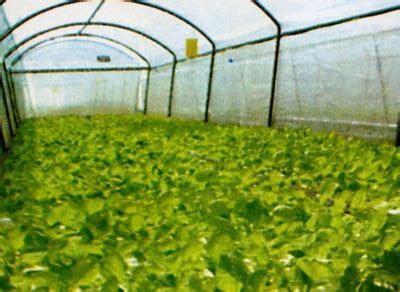 manao_naja: การปลูกพืชไร้ดิน (Soilless Culture)