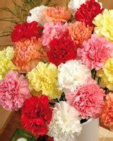 Трафареты шаблоны разных цветов Different flowers