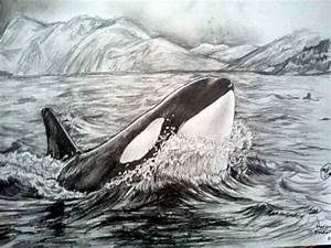 Orca killer whale drawing by Marianne Fredericks. Www ...