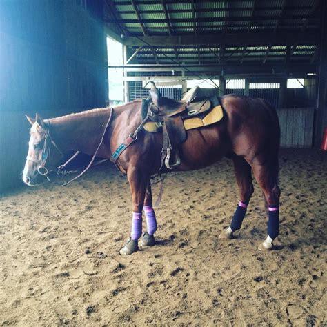 saddle pads cute horse horses western besteverpads pad jumping