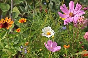 Quoi Planter En Automne : top 10 des fleurs planter la rentr e parc jardin ~ Melissatoandfro.com Idées de Décoration