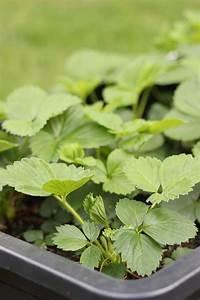 Pflanzen Im Mai : hochbeet im m rtelkasten anlegen the inspiring life ~ Buech-reservation.com Haus und Dekorationen