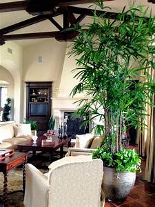 Best tall indoor house plants for Interior decorating houseplants