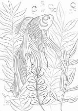 Coloring Fish Goldfish Fishes Algae Pages Natural Veil Magical Wonderful Swimming Follow Discover Around Adult Nature Setting sketch template