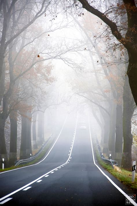 beautiful foggy road  pictures