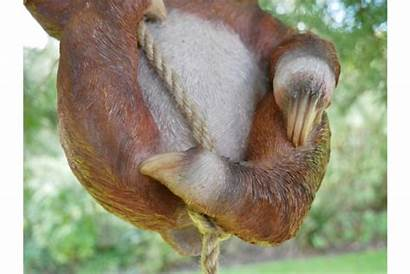 Sloth Steve Garden Hanging
