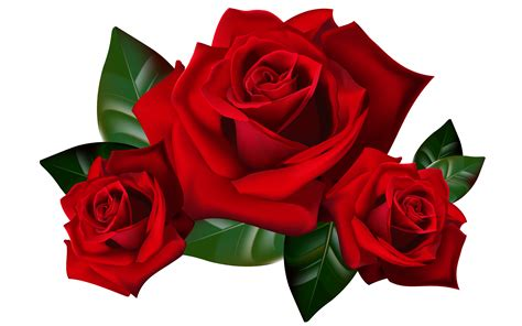 red roses png clipart picture hd desktop wallpaper widescreen backgrounds  mobile tablet