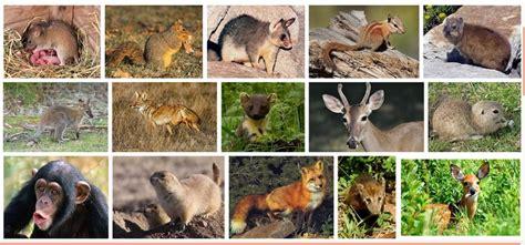 hewan mamalia pengertian ciri ciri contoh terlengkap