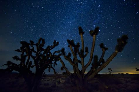 Free Images Landscape Wilderness Cactus Sky Night