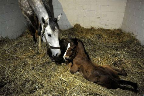 foal mare newborn horse horses behavior amazinganimals xyz