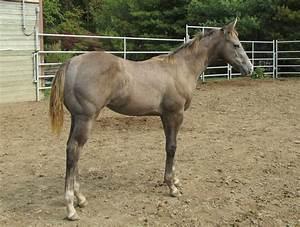 Newborn Baby Horse