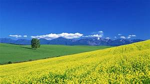 Beautiful Spring Landscape Full HD Wallpapers 16716 ...