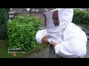 Hornissennest Im Haus : wespennest vespula vulgaris funnycat tv ~ Lizthompson.info Haus und Dekorationen