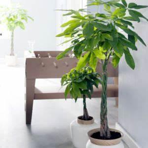 Grande Plante D Intérieur Facile D Entretien : plante pour appartement ~ Premium-room.com Idées de Décoration