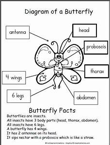 311 Best Butterfly Unit Images On Pinterest