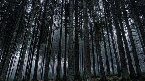 Dark Forest Wallpaper  Mobile & Desktop Background