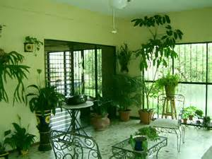 home interior plants plants inside rooms